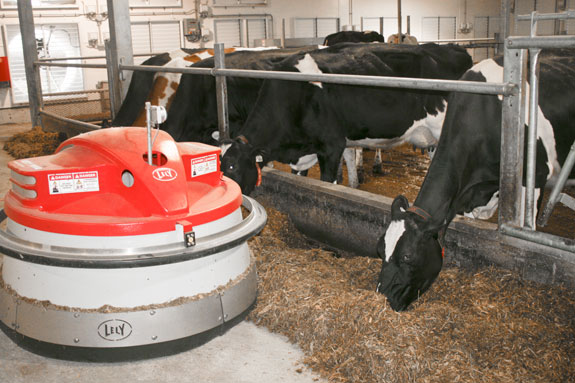Robot and cows