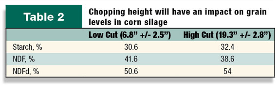 Chopping height will have an impact on grain levels in corn silage