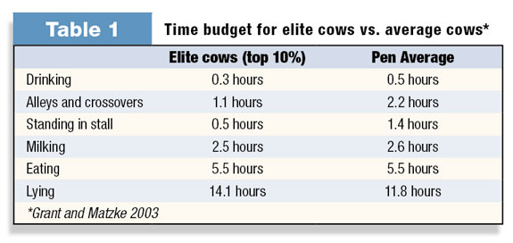 Time budget for elite cows vs. average cows
