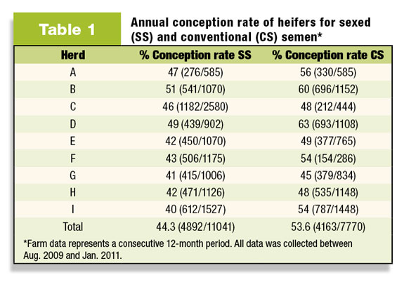 Annual conception rate of heifers for sexed and conventional semen